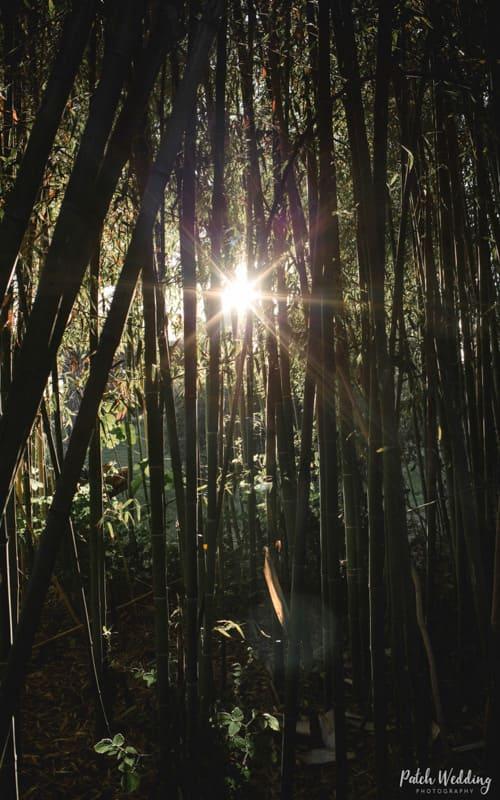 tenuta-dellOlmo-bamboo5
