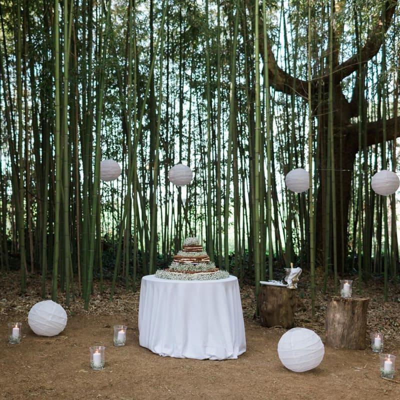 tenuta-dellOlmo-bamboo9